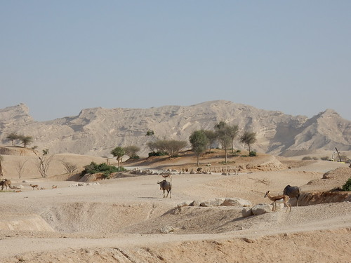 Al Ain Zoo - safari - 2