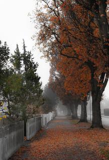 November | by Eldkvast