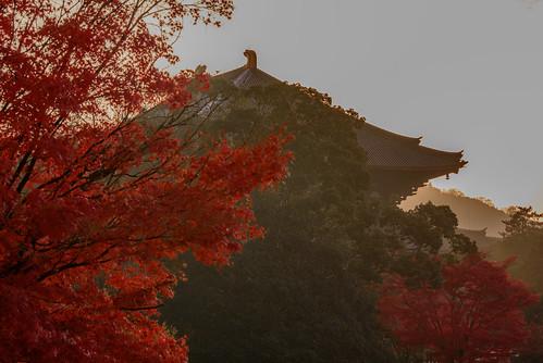 japan 奈良県 奈良公園 大仏池 東大寺 寺院 temple 紅葉 autumnleaves 日の出 sunrise 世界遺産 worldheritage