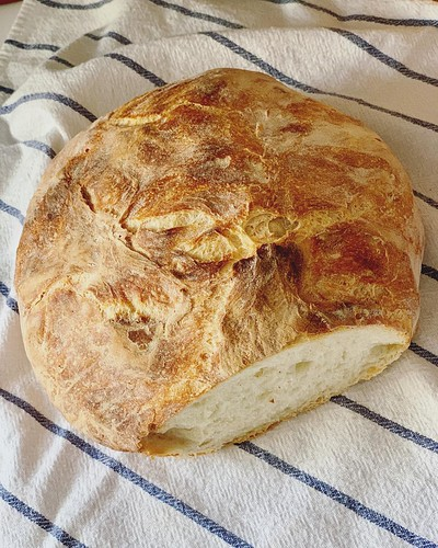 We made our 2nd loaf of homemade bread yesterday (8-hour fermentation no-knead bread); working our way through Bread Baking for Beginners by Bonnie OHara. Maddy would very much like us to give her a piece. 🍞👀😋 #breadmaking #bread #breadbaki