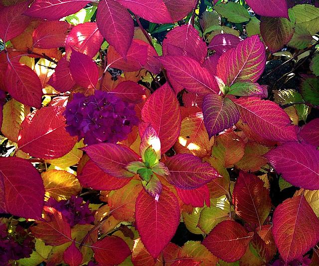 Autumn Kaleidoscope Nr.2