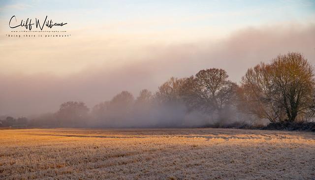 Mist in the fields