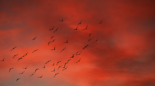 art beauty bright colorful colourful colors colours contrast dark downtown light minimalism natural perspective pattern pretty scene sky southwest study texture tone world bird sunset cloud albuquerque newmexico fly flock flight silhouette