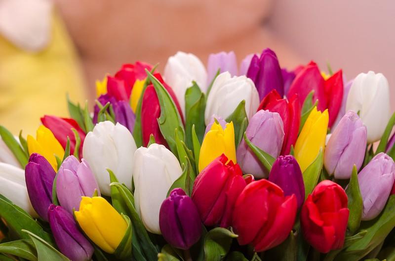 Обои цветы, букет, colorful, тюльпаны, flowers, tulips, spring, multicolored картинки на рабочий стол, раздел цветы - скачать