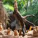 Brevard_Zoo by C.S. McDonald