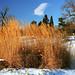 "Cincinnati - Spring Grove Cemetery & Arboretum ""Tall Grass At Willow Lake"" by David Paul Ohmer"