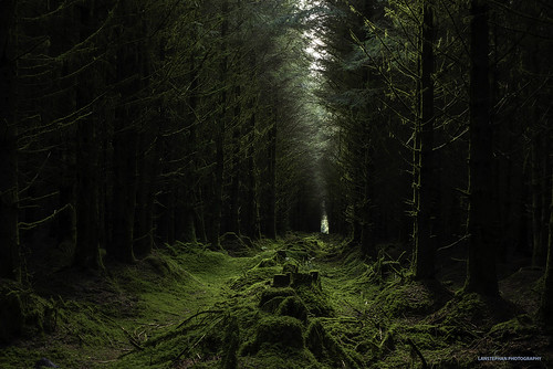 cornwall kernow davidstowaerodrome plantation trees