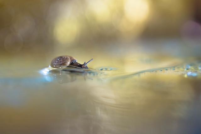 Plonger sous l'eau