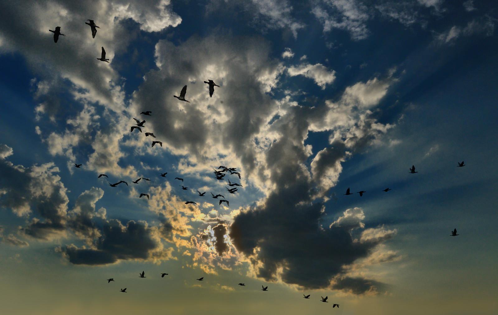 фотограф Челябинск - закат и птицы