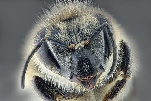 Bee | by Rui Pará