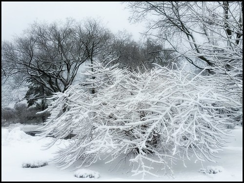 snowcoveredbranches whiteonwhite nature landscape