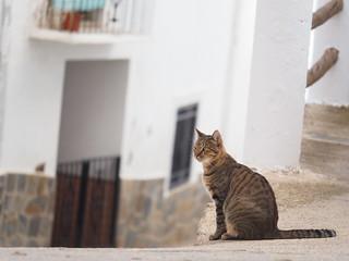 Cat White Village Spain Andalusia © Katze Spanien Andalusien Sierra Nevada Alpujarras © Andalucía La Alpujarra Granadina ©