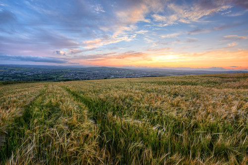 county uk flowers ireland sunset summer vacation sky irish sun mountain holiday tourism nature field grass barley yellow set river lens landscape photography countryside town site spring corn nikon europe photographer outdoor top pano wheat side country hill wide harvest scenic visit tourist panoramic fox british crops hd ni colourful nikkor northern grassland maize gareth donegal mourne tyrone wray lifford riverscape strabane sperrins d810 1424mm knockavoe hdfox
