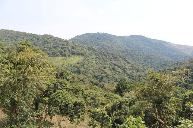 Issues in Gishwati-MUkura Landscape