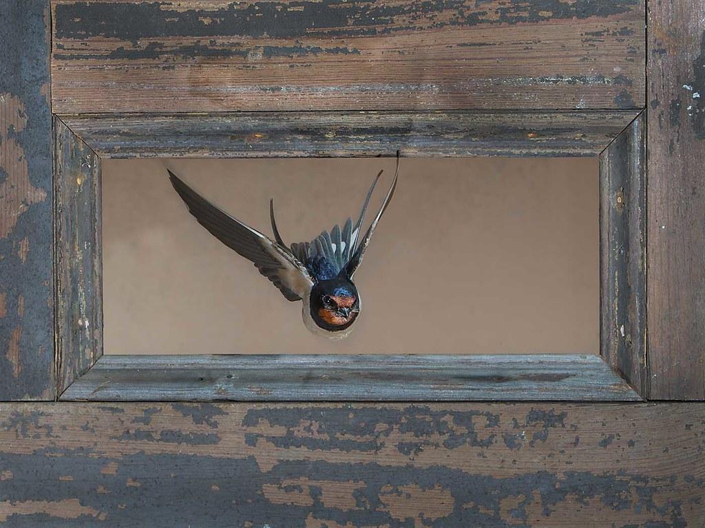 Still work in progress, Swallow flying through door panel