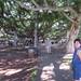 05 - Lahaina, Hawaii