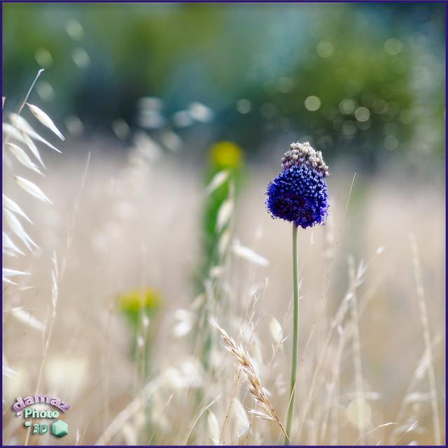 Soft fields 12