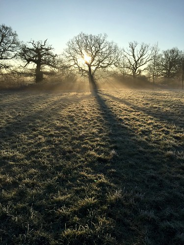 misty sunrise dawn trees silhouette johndalkin heavensgatejohn shadows winter frost grass field blue sky atmosphere landscape 25faves 50faves