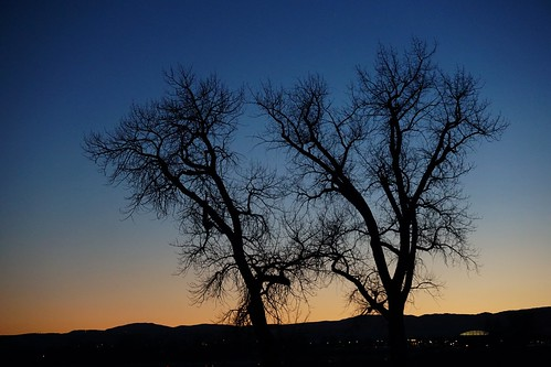 cottonwood cottonwoods tree trees silhouette evening dusk sky clearsky winter branches limbs leafless sundown sunset noclouds ridgeline horizon two pair twotrees apairoftrees louisville co colorado louisvilleco louisvillecolorado atardecer cielo himmel