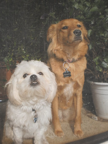 Frankie and cousin Walter | by Cuyahoga jco