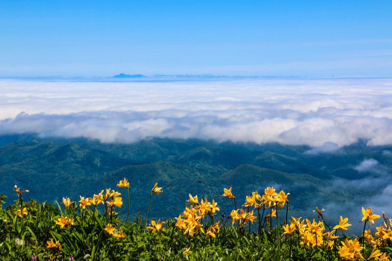 斜里岳 エゾカンゾウ