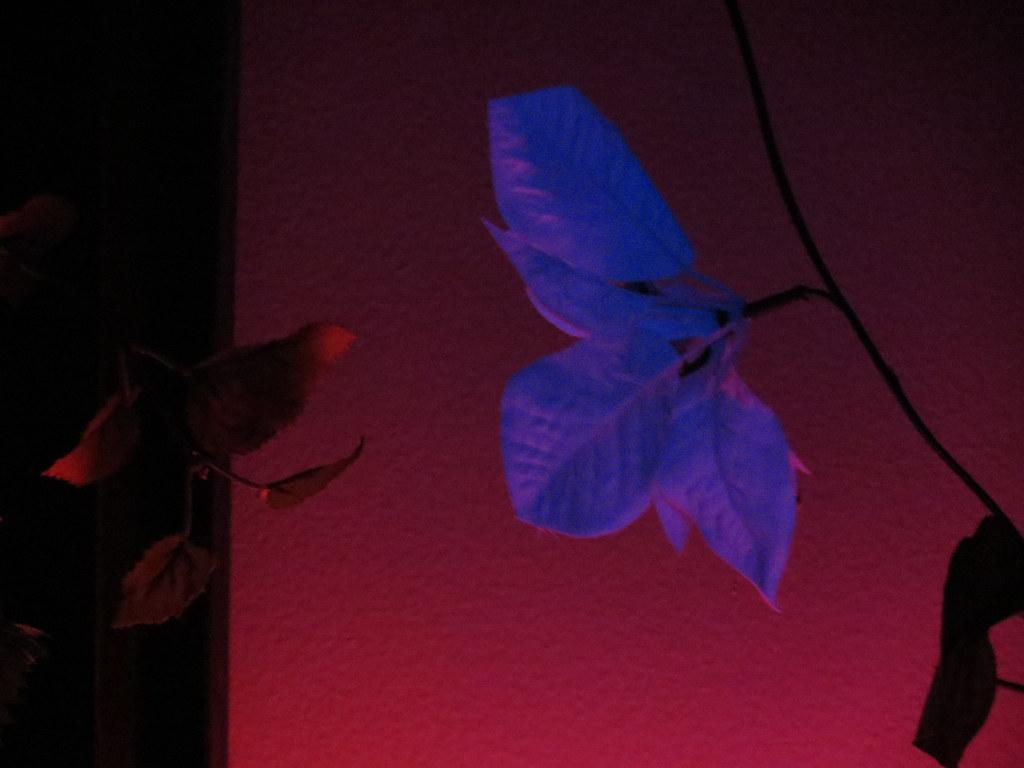 pink floyd wall flowers | angela bosset | Flickr