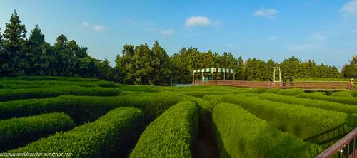 Gimnyeong Maze Park | by dessidiah