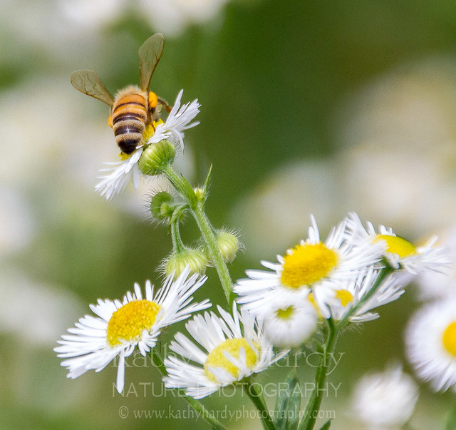 Quest for Bees...