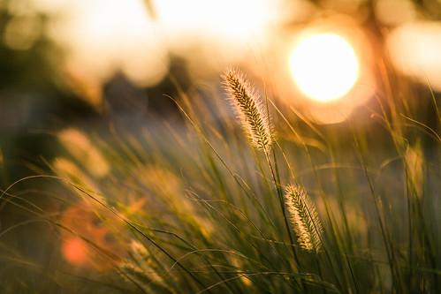 sunset nature durham northcarolina sunlit goldenhour mastinlabs