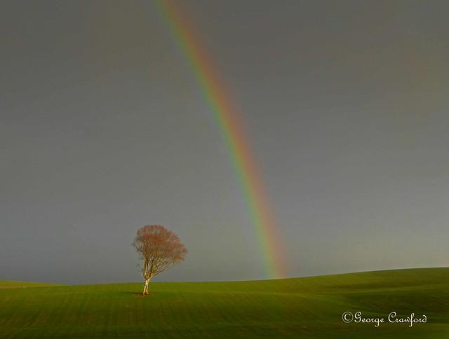 Boxing Day Rainbow1