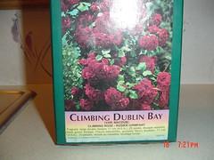 Climbimg Dublin Bay