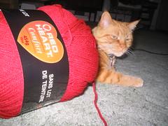 cat eating yarn