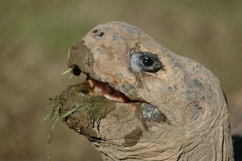 Smile Turtle