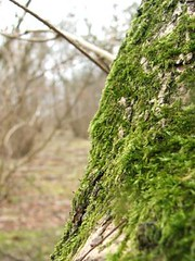 Study on Moss: #1