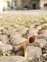 Leaf on cobbles