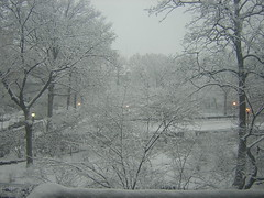 View of the snow-covered park from my window sill.