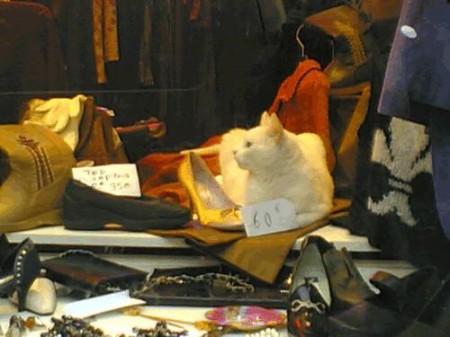 Combien pour ce chat dans la vitrine?