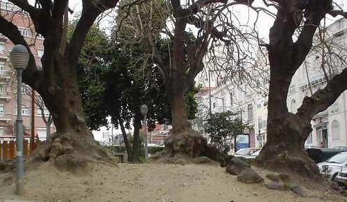 tronco e raiz
