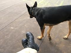 uzi the dog