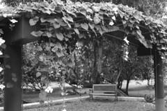 mango farm scenes 3