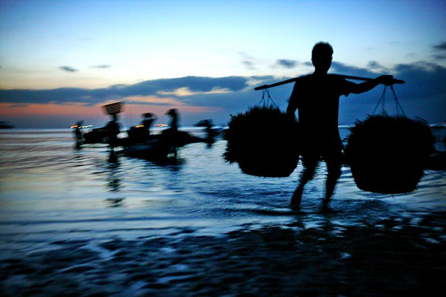 seaweed farmers bring harvest home at sunset