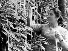 speghetti growers