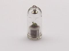 Plant in capsule
