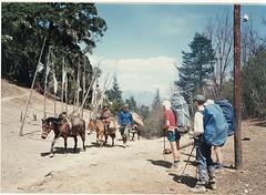 dongyi donkeys