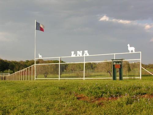 llllllllama ranching near lllllano texas