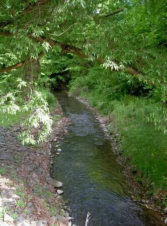 A Brook Runs Through It