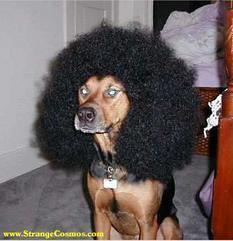 real dogg