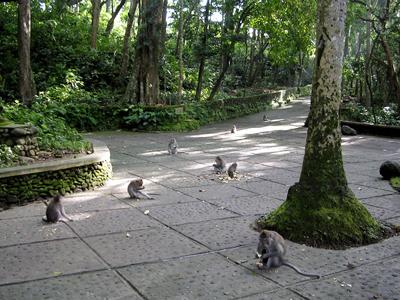 聖猴森林保護區