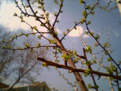 ah spring