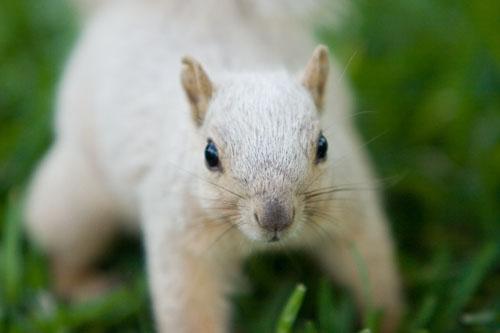 Eddie the Albino Squirrel